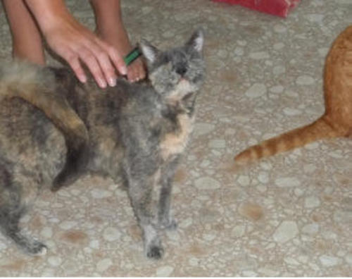Blind Cat Rescue Is A Life Time Care Sanctuary For Blind