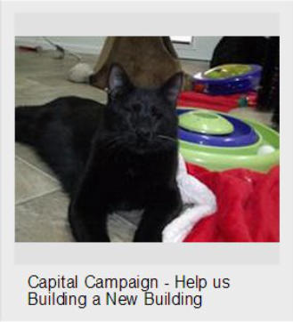 Pepper ask can you please help us save more cats