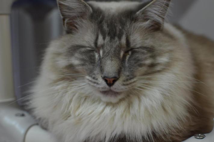 Blind Cat Rescue Amp Sanctuary