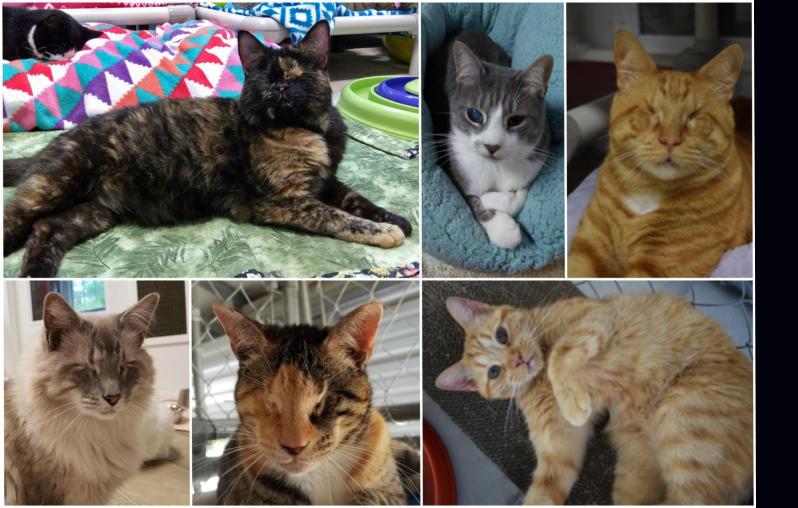 ab6c0de5 Blind Cat Rescue - Wish list .